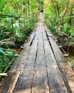 A suspension bridge in the jungle of Guatemala